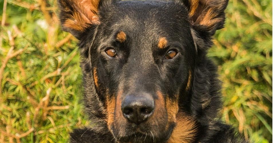 Over een doodzieke hond en een rollercoaster van gedachten en emoties